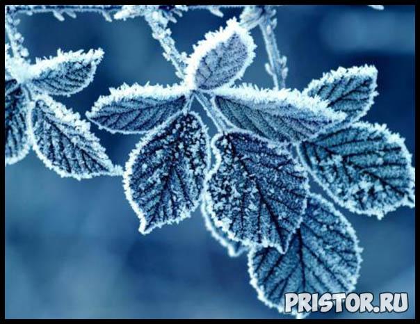 Фото снега и льда в природе, красивые фото льда и снега - природа 11