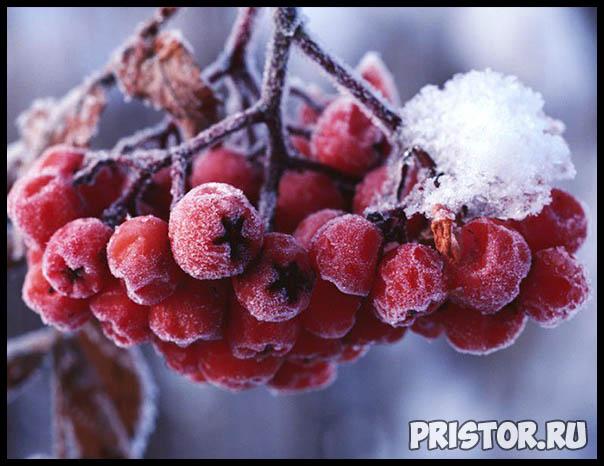 Фото снега и льда в природе, красивые фото льда и снега - природа 9