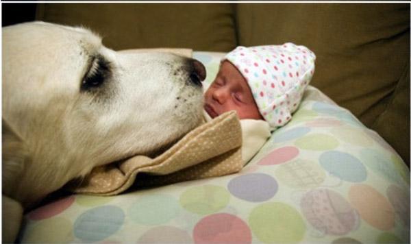Собака картинки и фото для детей - красивые и прикольные 2