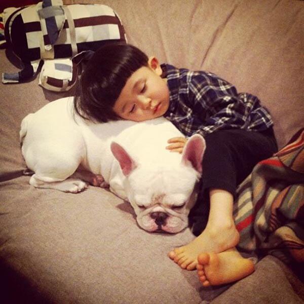 Собака картинки и фото для детей - красивые и прикольные 1