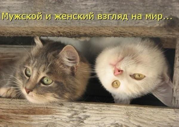 Смешная котоматрица бугага - твое хорошее настроение!