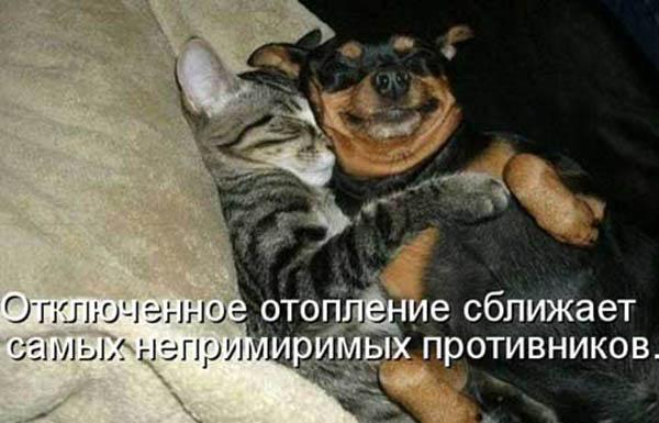 Смешные картинки животных с надписями - ржачные и прикольные 1