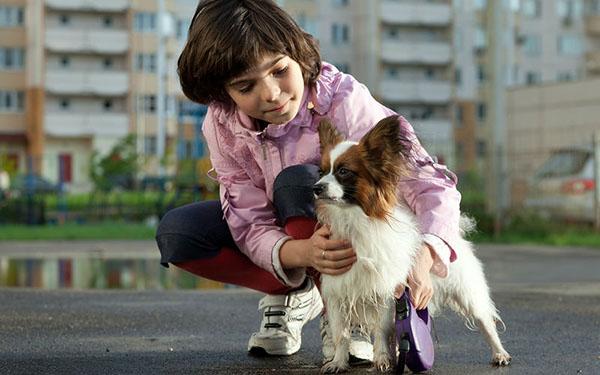 Картинки домашних животных для детей - красивые фото и картинки 2