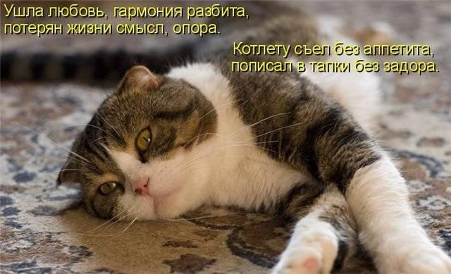 Прикольные фотки котов с подписями:-) (35 фото )