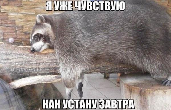 Смешные картинки животных с надписями - ржачные и прикольные 3