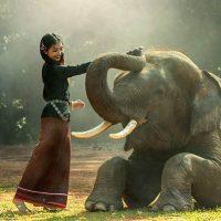 Картинки домашних животных для детей - красивые фото и картинки 3