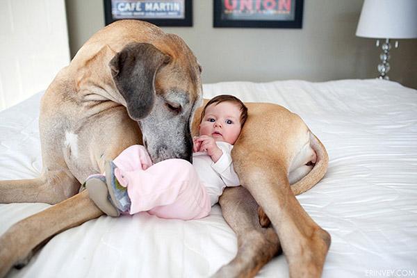 Собака картинки и фото для детей - красивые и прикольные 4