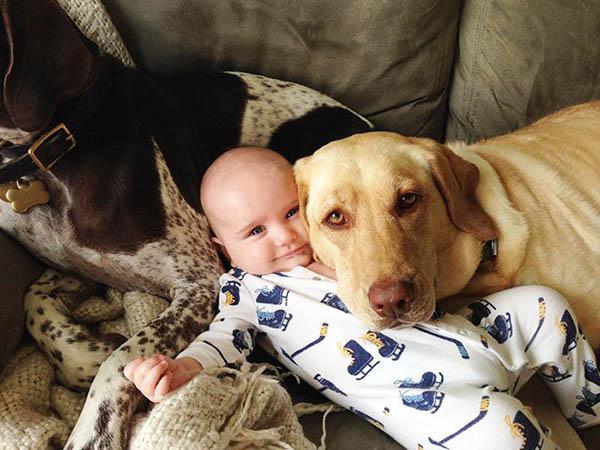 Собака картинки и фото для детей - красивые и прикольные 5