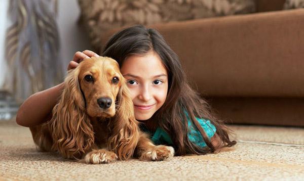 Картинки домашних животных для детей - красивые фото и картинки 5