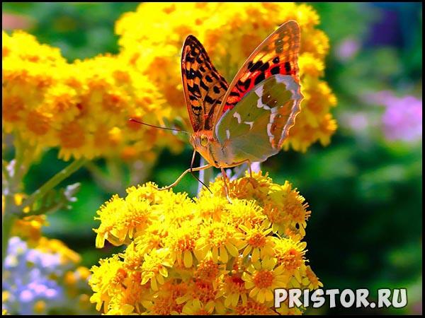 Фото лета, природа красивые фото и картинки лета 4