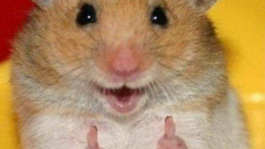 Смешные картинки с животными - с надписями смотреть 12