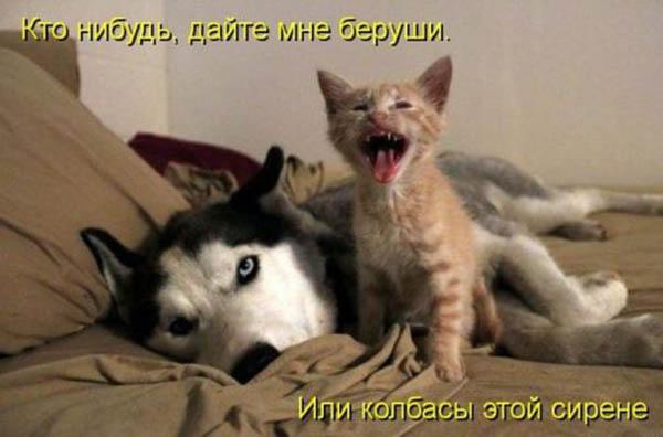 Смешные картинки животных с надписями - ржачные и прикольные 10