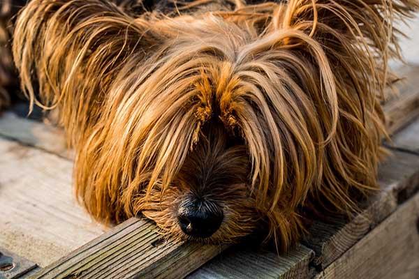 Собака картинки и фото для детей - красивые и прикольные 13