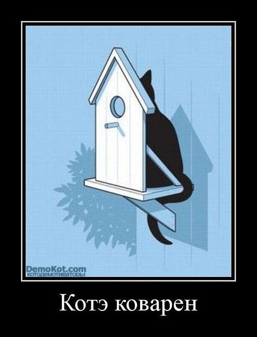 Демотиваторы про котов смешные, ржачные демотиваторы с котами 14