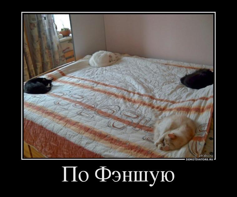 Демотиваторы про котов смешные, ржачные демотиваторы с котами 16