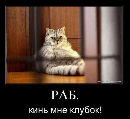 Демотиваторы про котов смешные, ржачные демотиваторы с котами 18