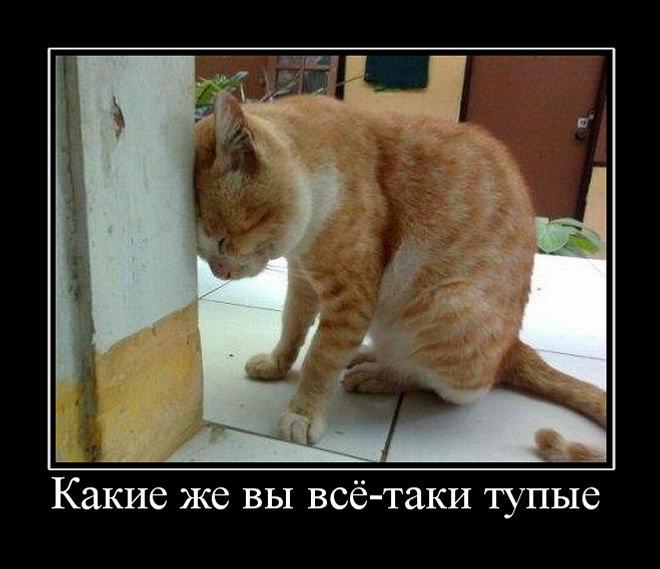 Демотиваторы про котов смешные, ржачные демотиваторы с котами 3
