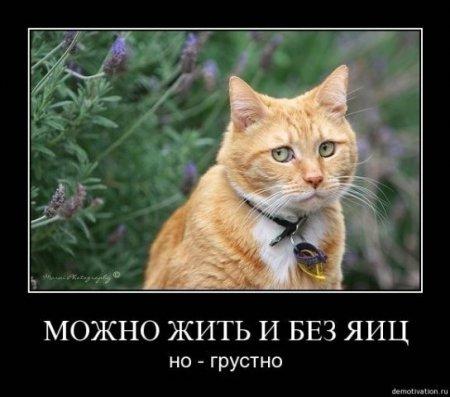 Демотиваторы про котов смешные, ржачные демотиваторы с котами 4