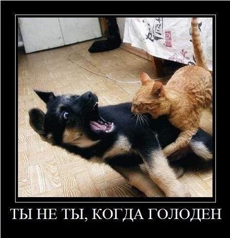 Демотиваторы про котов смешные, ржачные демотиваторы с котами 5