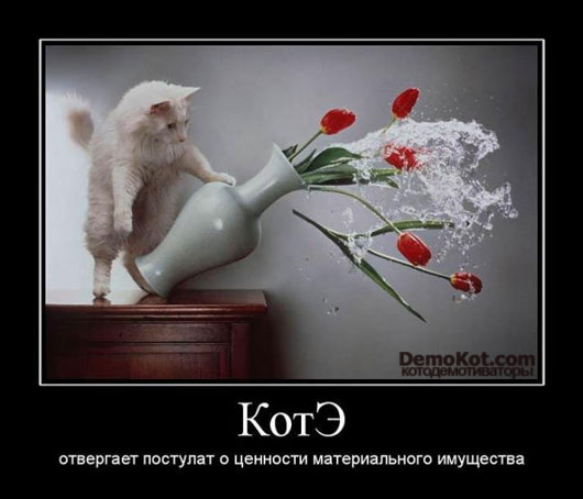 Демотиваторы про котов смешные, ржачные демотиваторы с котами 6