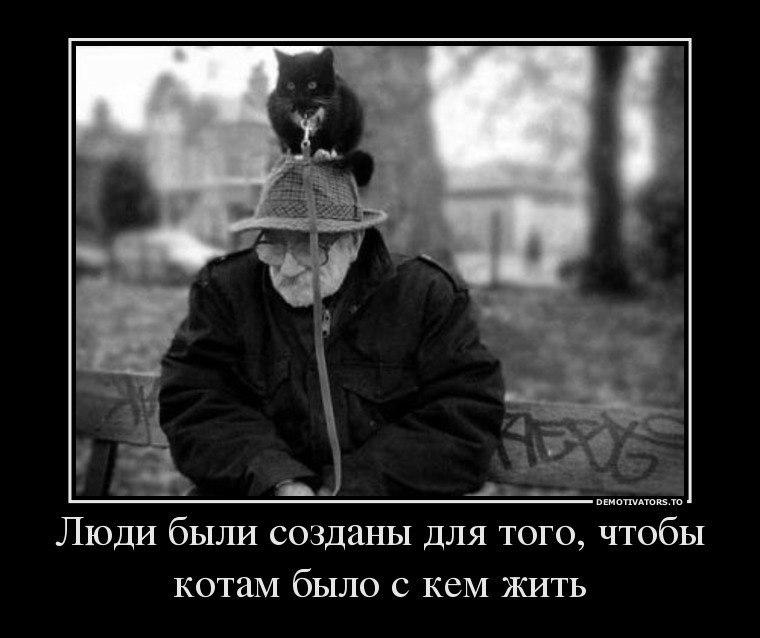 Демотиваторы про котов смешные, ржачные демотиваторы с котами 7