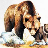 Дикие животные картинки для детей - красивые и прикольные 3