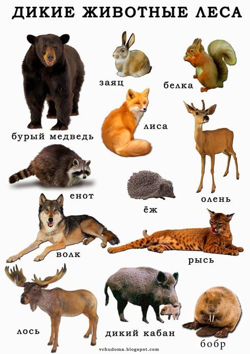 Дикие животные картинки для детей - красивые и прикольные 6