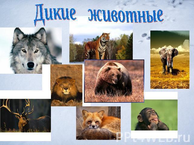 Дикие животные картинки для детей - красивые и прикольные 7