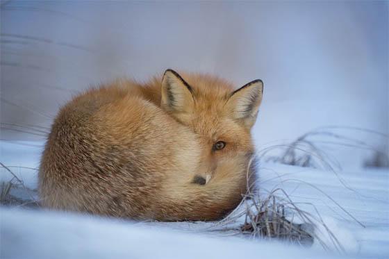 Живая природа зимой - фото красивые, удивительные, интересные 1