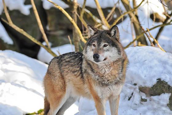 Живая природа зимой - фото красивые, удивительные, интересные 12