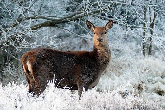 Живая природа зимой - фото красивые, удивительные, интересные 13