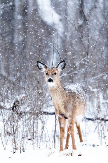 Живая природа зимой - фото красивые, удивительные, интересные 15
