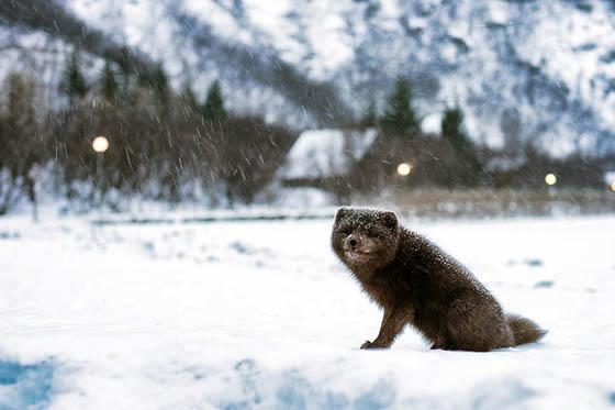 Живая природа зимой - фото красивые, удивительные, интересные 5