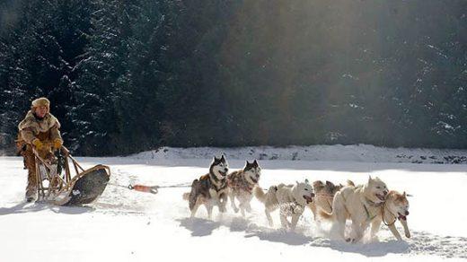 Живая природа зимой - фото красивые, удивительные, интересные 7