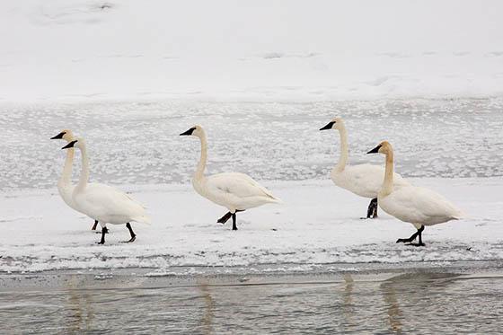 Живая природа зимой - фото красивые, удивительные, интересные 8