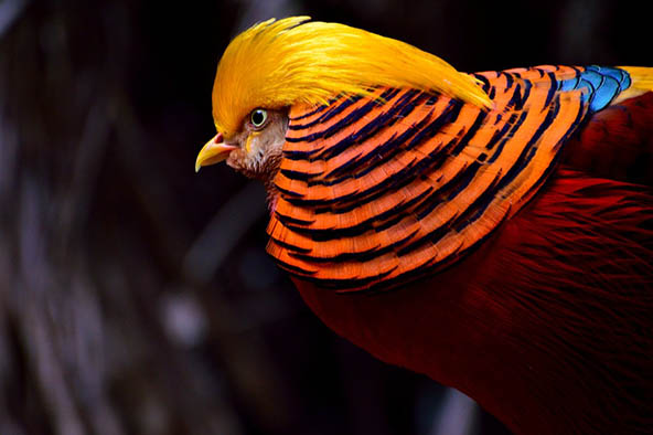 Живая природа картинки, картинки природы и животных - смотреть 12