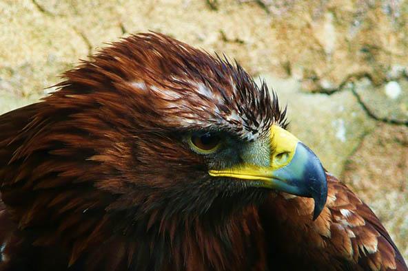 Живая природа картинки, картинки природы и животных - смотреть 13