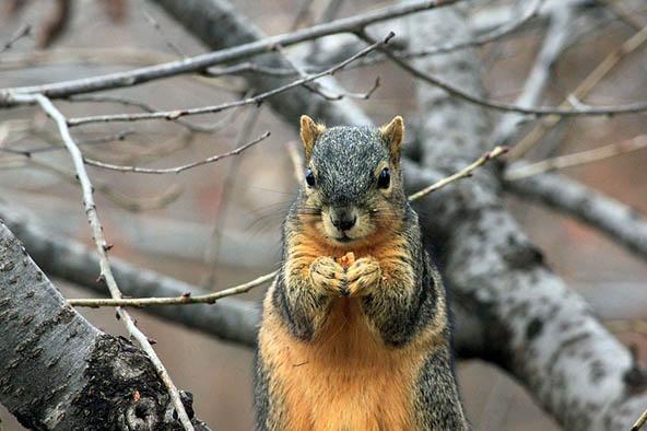 Живая природа картинки, картинки природы и животных - смотреть 14