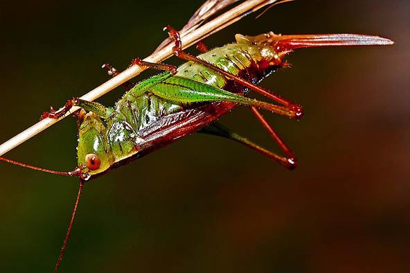 Живая природа картинки, картинки природы и животных - смотреть 3