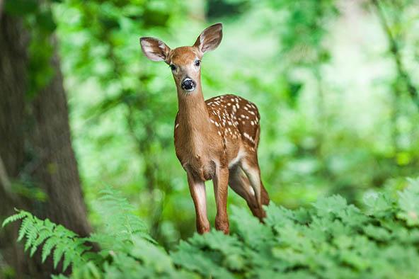 Живая природа картинки, картинки природы и животных - смотреть 6