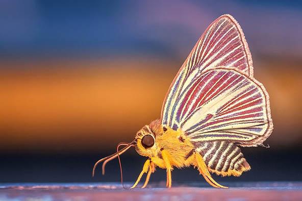 Живая природа картинки, картинки природы и животных - смотреть 7