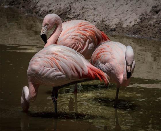 Живая природа картинки, картинки природы и животных - смотреть 8