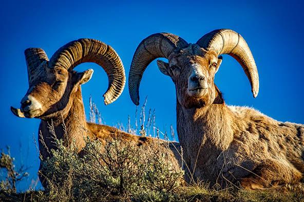 Живая природа картинки, картинки природы и животных - смотреть 9