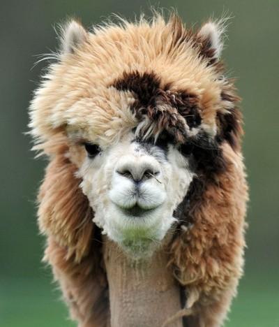 Забавные животные - картинки и фото, смешные животные - картинки 25