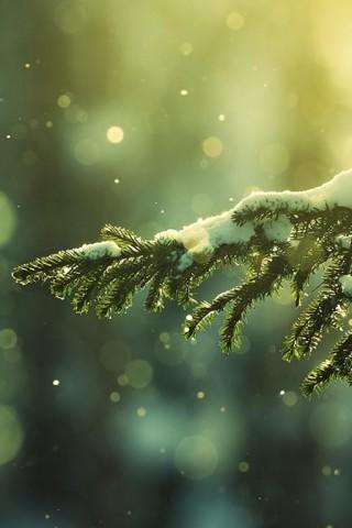 Зимние картинки на телефон - красивые, прикольные скачать бесплатно 9