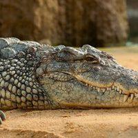 Интересные факты о животных для детей - 30 фактов 23