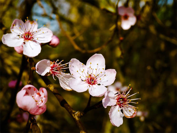 Картинки весна природа, красивые картинки весны в природе 1