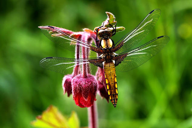 Картинки весна природа, красивые картинки весны в природе 13