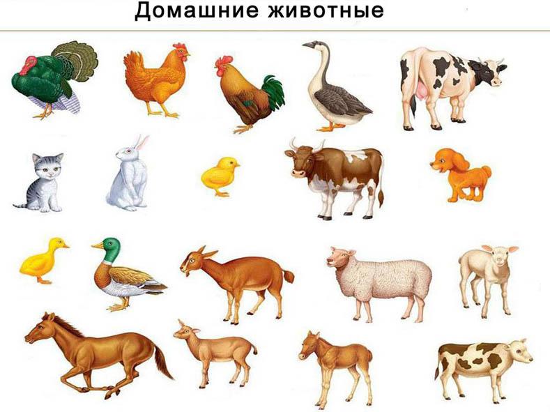 Картинки домашних животных для детского сада - красивые и прикольные 1