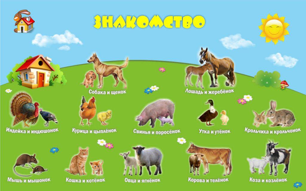 Картинки домашних животных для детского сада - красивые и прикольные 11